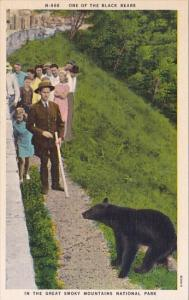 One Of The Black Bears In The Great Smoky Mountains National Park