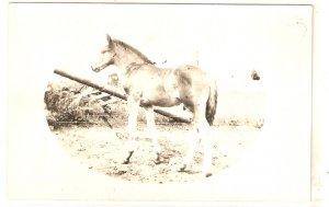A Horse Old vintage antique postcard