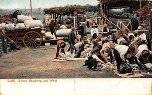 US Western Life Sheep Shearing out West, trimmed sides