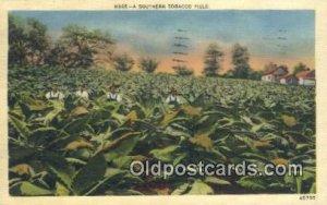 Southern Tobacco Field Farming Postcard Post Card 1940