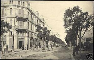tunisia, TUNIS, Avenue de Carthage (1910s) ND Phot