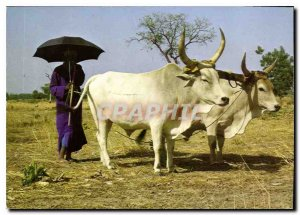Modern Postcard Shepherd Shepherd Ful Fulani Pular Hirten