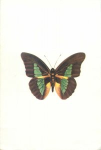 Butterfly postcard green