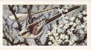 Trade Cards Brooke Bond Wild Birds in Britain No13 Long-Tailed Tit