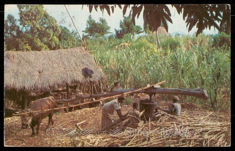Peasant Farmers Grinding Cane