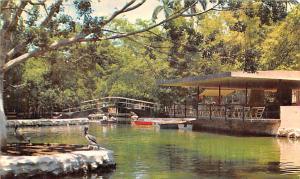 Mexico Old Vintage Antique Post Card Lake of the Centenario Yucatan Unused
