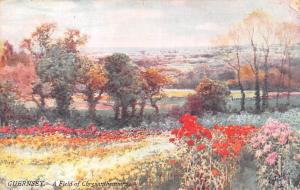 C.I. Guernsey A Field of Chrysanthemums Flowers 1908