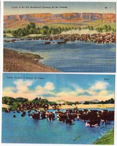 2 - Cattle Crossing the Rio Grande