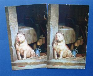 Low Life White Dog Portrait Antique Postcards Sir Edwin Landseer