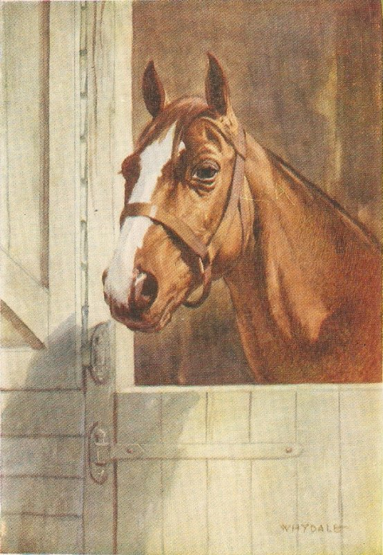 Whydale. Horse. The Throughbred Nice old vintage Englisah  postcard