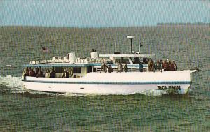 Florida Tarpon Springs Dolphin