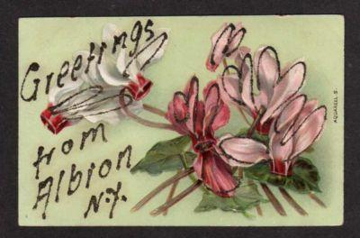NY Greetings from ALBION NEW YORK Postcard PC Flowers