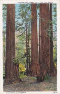Fremont and Jumbo Trees Big Tree Grove Santa Cruz California Curteich