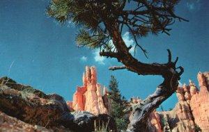 Bryce Canyon Nat'l Park, UT, Queen's Garden, Chrome Vintage Postcard g9220