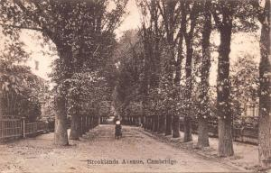 CAMBRIDGE ENGLAND~BROOKLAND (S) AVE~MASSIVE TREES~STROLLER ALDWYCH SERS POSTCARD