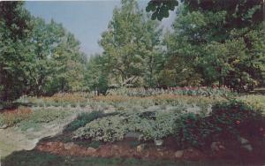 Beautiful floral display in City Park, Hickory, NC, unused Postcard