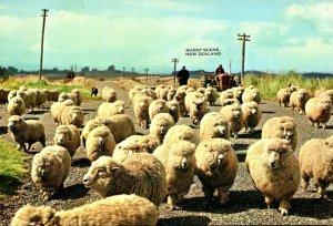 New Zealand Auckland Sheep Scene