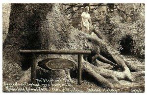 Wonderland Redwood Park CA Real Photo Postcard Girl On Elephant Tree #76354