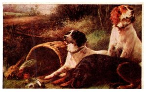Dog , Hunting Dogs