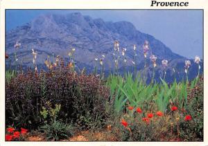 France Reflets de Provence Flowers Fleurs