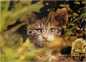 Postcard Modern Cat