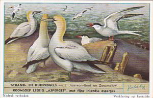 Liebig S1610 Birds Of Beaches and Dunes No 2 Jan-van-Gent en Zeezwaluw