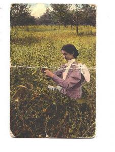 Woman in Field, The First of Season Warwick 4324