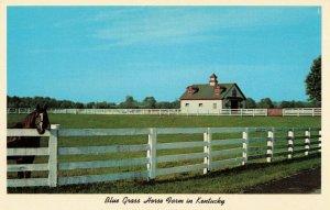 Postcard Blue Grass Horse Farm Kentucky