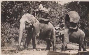 Singapore Elephant Elephants Working Mounted Stunning Animal RPC Photo Postcard