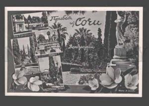 090262 RUSSIA Sochi Tree nursery Old photo collage PC