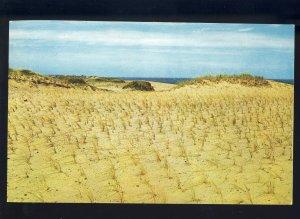 Cape Cod, Massachusetts/MA Postcard, American Beach Grass,National Seashore Area