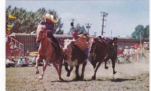 Steer Decorating, Calgary Stampede, Alberta, Canada, 40-60s