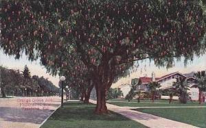 California Pasadena Millionaires Row Orange Grove Avenue