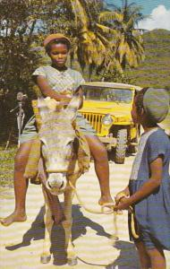 St John Typical Transportation Burros and Jeep