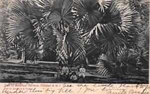 Tree in Botanical Gardens, Trinidad, B.W.I., Early Postcard, Used in 1907