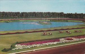 Florida Parading To The Post Hialeah Race Course 1956