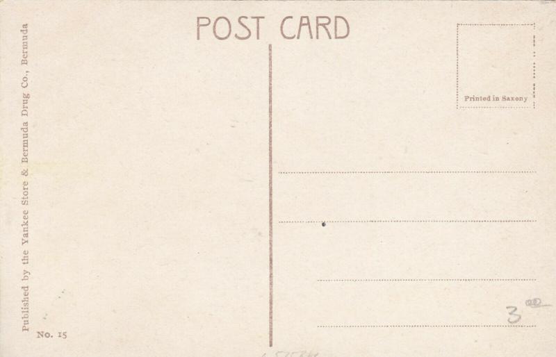 BERMUDA, 1900-10s ; Lily Field # 2
