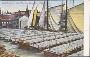 Gloucester MA - FISH DRYING on the wharves after a day at sea, 1900s