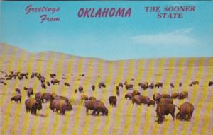 Greetings From Oklahoma The Sooner State With Buffalo Herd