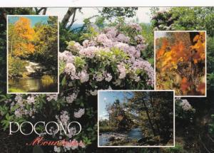 Pennsylvania Pocono Mountain Wildflowers 1997