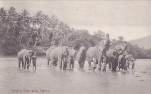 Elephants In River Ceylon Sri Lanka