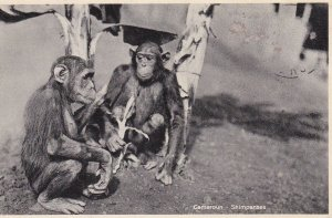 Cameroun - Shimpanses , 1935