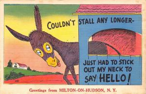 Milton-On-Hudson New York~Couldn't Stall Any Longer~Donkey Sticks Neck Out~1957