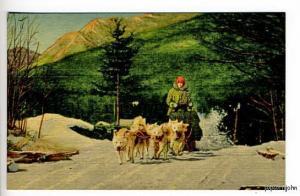 North Woodstock NH Eskimo Sled Dogs Linen Postcard