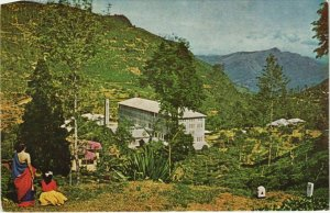 CPM Tea Factory and Estate near Nuwara Eliya CEYLON SRI LANKA (1085953)