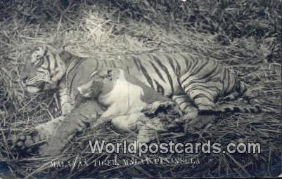 Malaysia, Malaya Malay Peninsula Malayan Tiger Real Photo