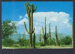 Saguaro Cactus BIN