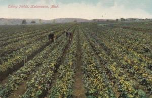 Michigan Kalamazoo Typical Celery Field 1909