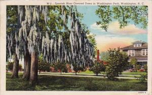 Spanish Moss Covered Trees In Washington Park Washington North Carolina 1950