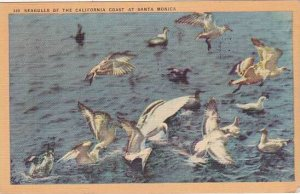 California Los Angeles Seagulls Of The California Coast At Santa Monica 1946